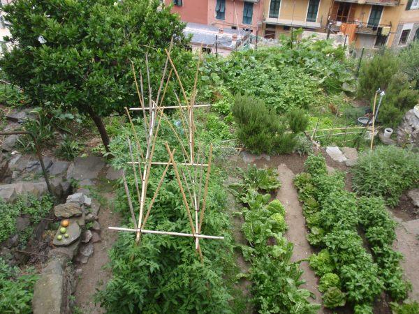 Kitchen Garden in Cinque Terre, Italy
