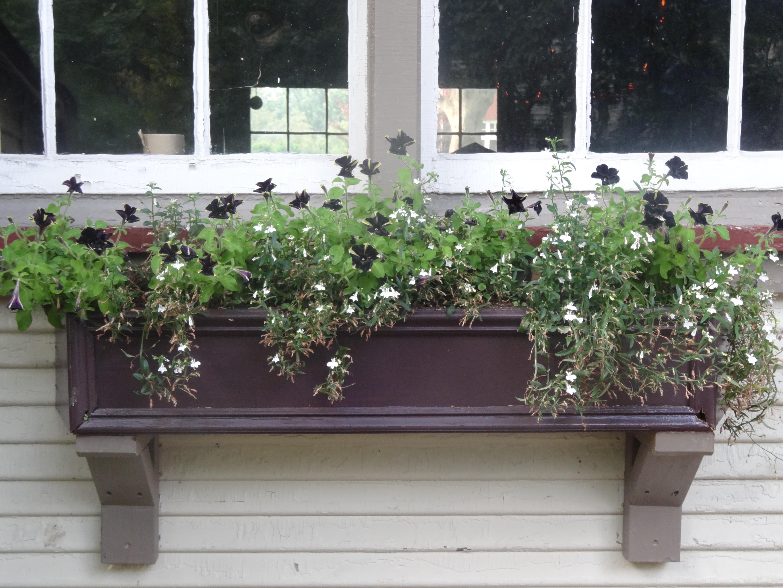container gardening  tended  page  - vintage modern window box tendedwordpresscom