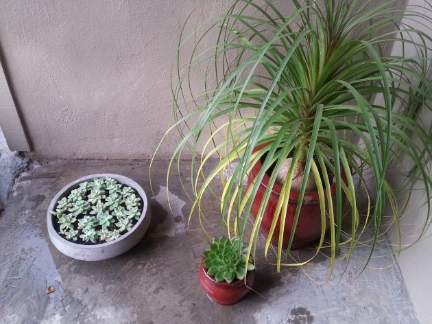 Asian Garden Inspiration Diy Succulents In A Stone Bowl