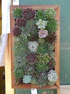 vertical succulent garden tended.wordpress.com