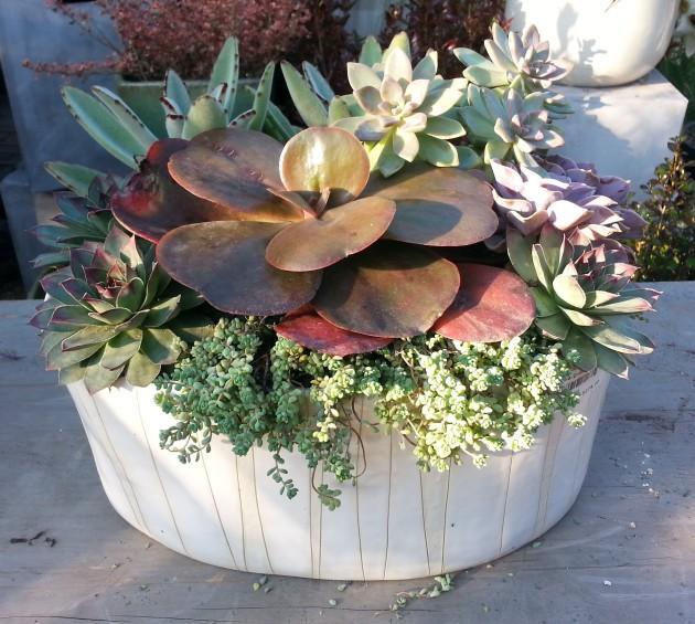 succulent dish garden tended.wordpress.com
